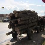 lemn furat cuzdrioara (4)