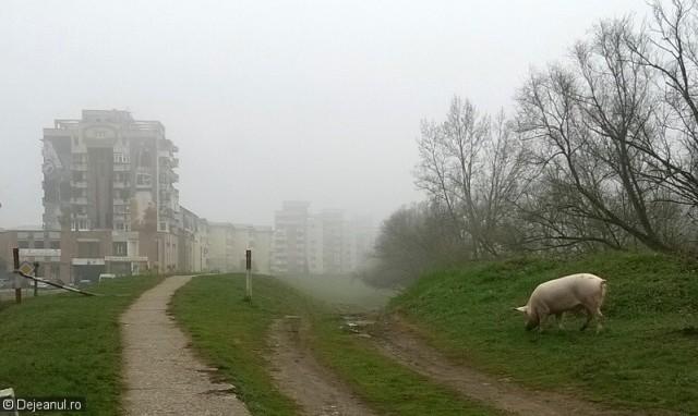 porc dig 1